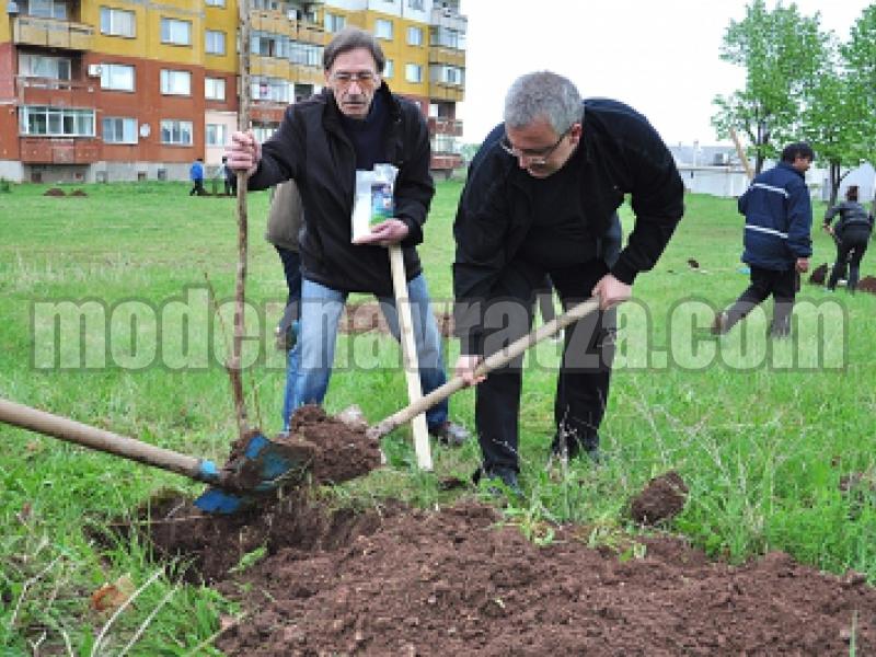 Общински служители засадиха 100 фиданки